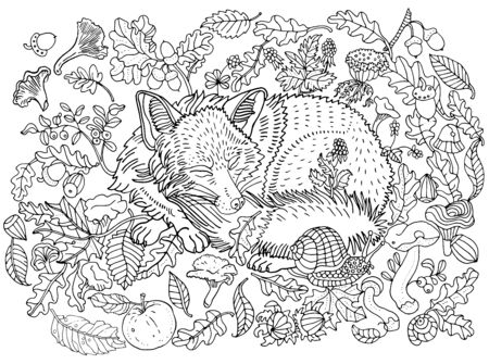 Cute sleeping fox among leaves, nuts, mushrooms, flowers and berries. Environment, nature, forest, plants. Hand drawn illustration. Coloring book page, postcard, childrens illustration.