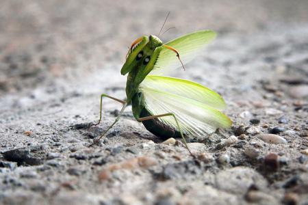 Mantis bug nature Archivio Fotografico