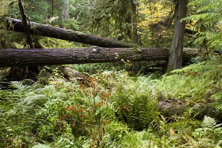 provincial forest parks: MacMillan Provincial Park is a provincial park on Vancouver Island in British Columbia, Canada. The park is home to a famous, 157 hectare stand of ancient Douglas-fir, known as Cathedral Grove.