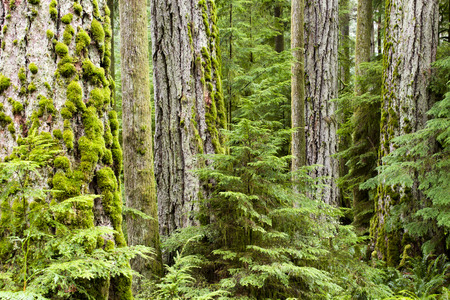 MacMillan Provincial Park is a provincial park on Vancouver Island in British Columbia, Canada. The park is home to a famous, 157 hectare stand of ancient Douglas-fir, known as Cathedral Grove.