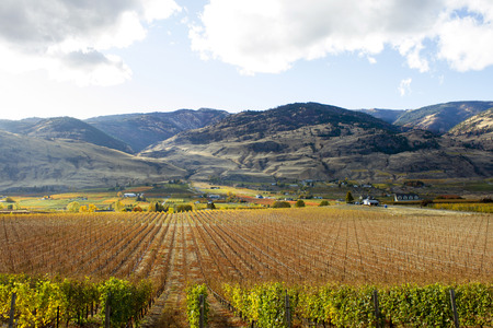Scenic autumn view of the rural landscape and vineyards of Oliver located in the Okanagan Valley of British Columbia, Canada.