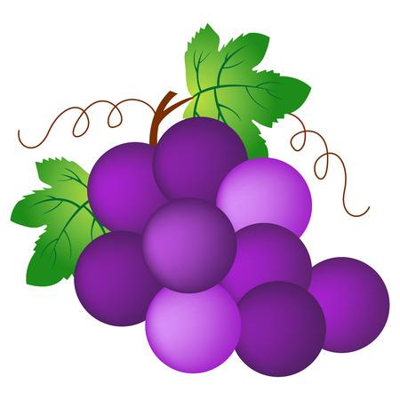 grapes: Ilustración de un racimo de uvas aisladas en blanco. Vectores