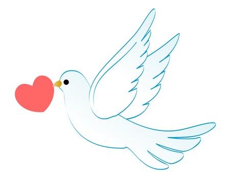 dove: Ilustración de una paloma blanca que lleva un corazón rojo aislado en fondo blanco