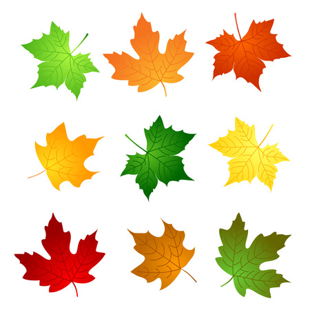 autumn leaves falling: Colorful maple leaves collection isolated on white background