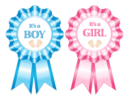 Blue and pink its a boy and girl rosettes isolated on a white studio background.
