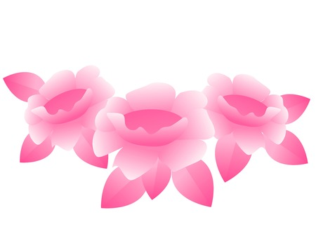 centifolia: Three beautiful pink roses illustration isolated on white Illustration