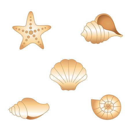 seashell: Collection of various seashells isolated on white background illustration