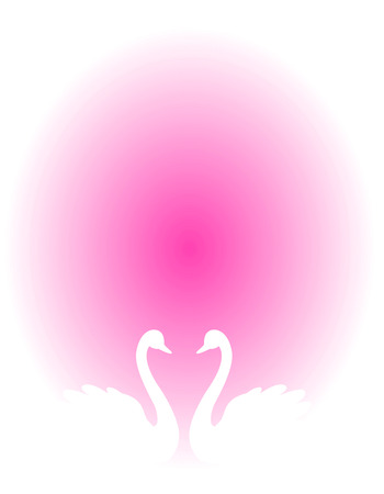 White swan couple in love illustration isolated on pink background. Can use as wedding invitation cards , wedding  love related designs