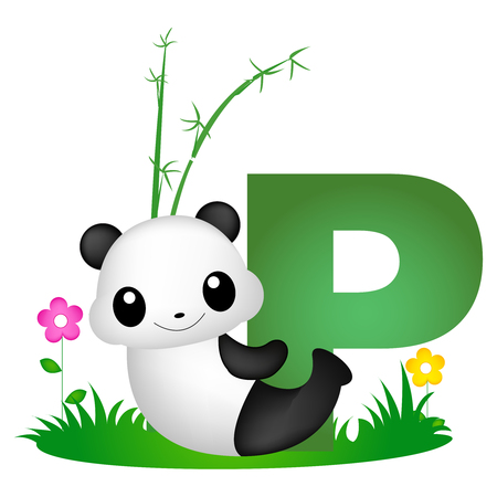 Colorful animal alphabet letter P with a cute panda flash card isolated on white background Illustration