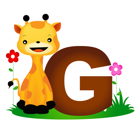 g giraffe: Colorful animal alphabet letter G with a cute giraffe flash card isolated on white background