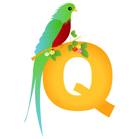 flash card: Colorful animal alphabet letter Q with a cute quetzal flash card isolated on white background