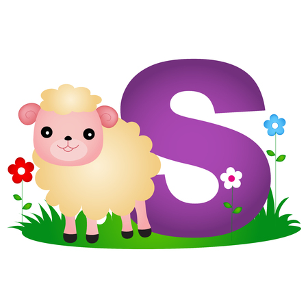 phonetic: Colorful animal alphabet letter S with a cute sheep flash card isolated on white background