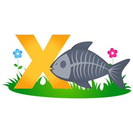 flash card: Colorful animal alphabet letter X with a cute x ray fish flash card isolated on white background