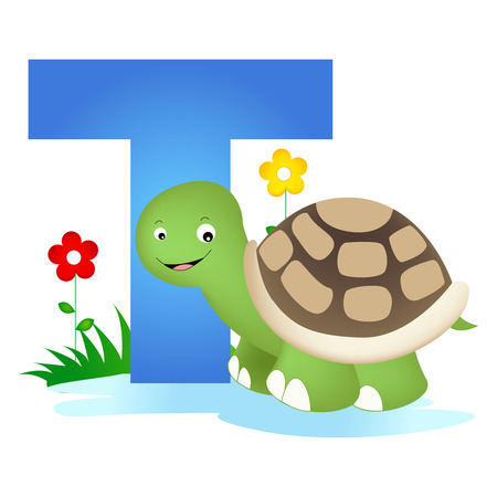 flash card: Colorful animal alphabet letter t with a cute turtle flash card isolated on white background