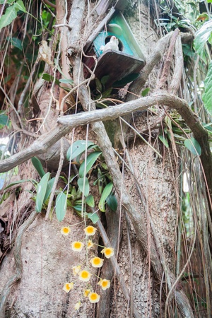 orchid house: Yellow wild orchid and wooden bird house