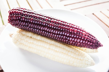Violet and yellow corn cobs boiled on the plate, stock photo Stock Photo