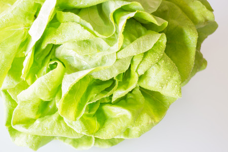 hydroponic: Butterhead hydroponic vegetable up close Stock Photo