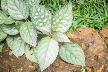 minimal: Minimal garden with green plant