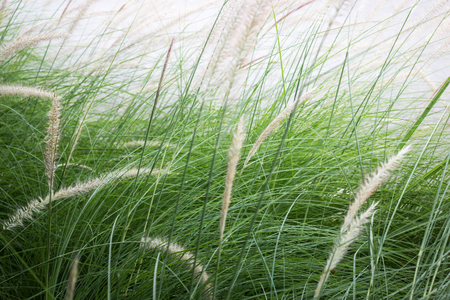 unaffected: grass flower background in nature, stock photo Stock Photo