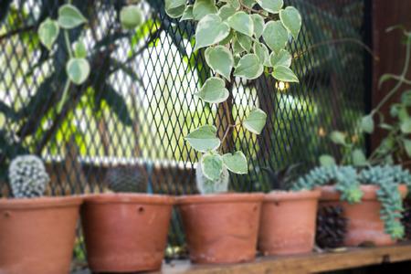 Jardín vertical cactus planta olla en verano, stock photo Foto de archivo - 73415609