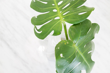 marbled effect: Beautiful White Mable With Green Plant On Top, stock photo