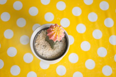 the topics: Cactus in pot on yellow dot table, stock photo Stock Photo