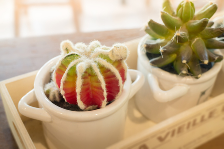 Small cactus pots on wooden table, stock photo