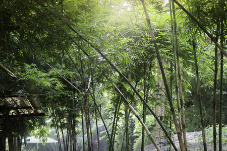 Bamboo forest in tropical weather Thailand, stock photo Standard-Bild