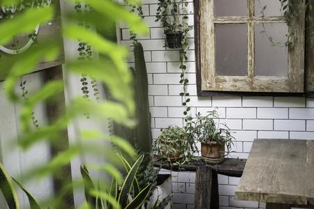 Green view indoor home garden, stock photo