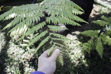 Woman hand touching green fern leaf, stock photo Standard-Bild