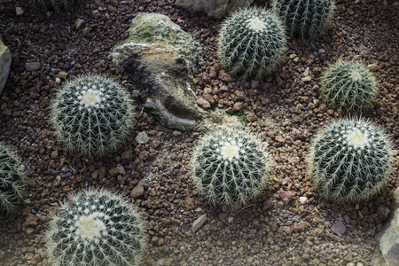Group of succulents and cactus growing