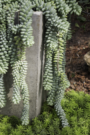 Group of succulents and cactus growing, stock photo Standard-Bild