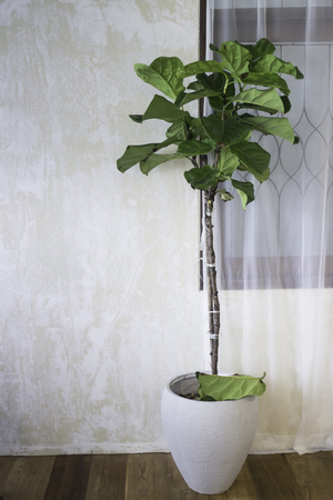 Indoor plant in bright living room, stock photo