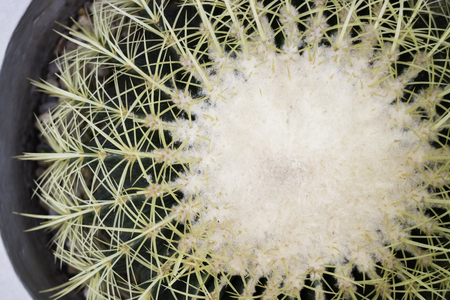 Close-up shot on top of cactus, stock photo Banco de Imagens