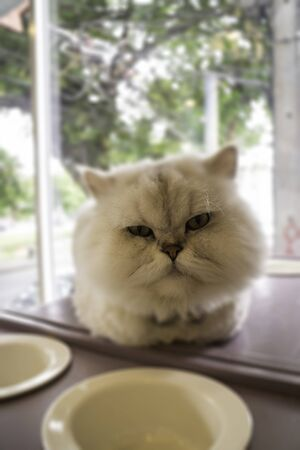 Domestic cat chilled in coffee shop, stock photo 스톡 콘텐츠