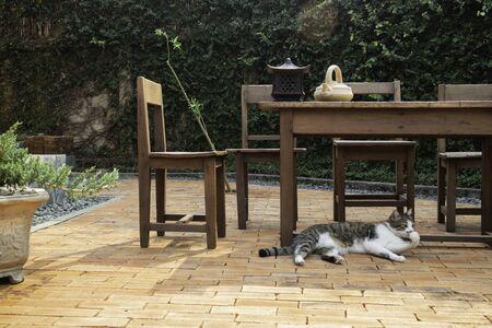 Cat chilled on brick floor background, stock photo Standard-Bild