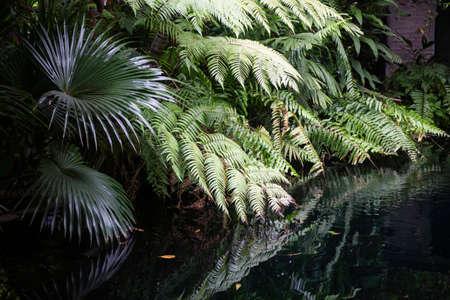 Green plants feel fresh surroundings, stock photo
