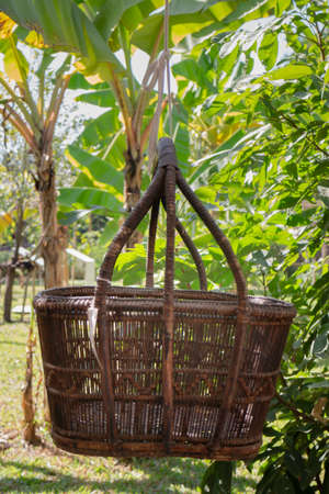 Weave basket hanging in the fruit garden, stock photo
