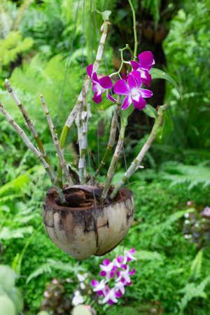 Hanging flower plant pot in garden, stock photo Stockfoto