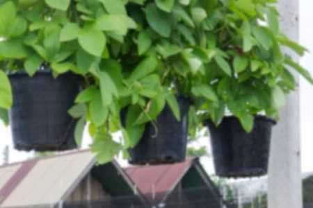 Tropical plant pot sale in green market, stock photo Stockfoto
