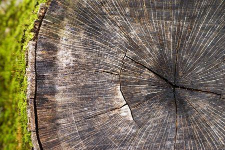Dead Tree Stump with Moss Stock Photo - 5754872
