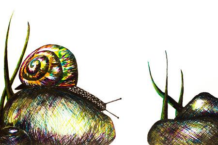 exotica: snail Stock Photo