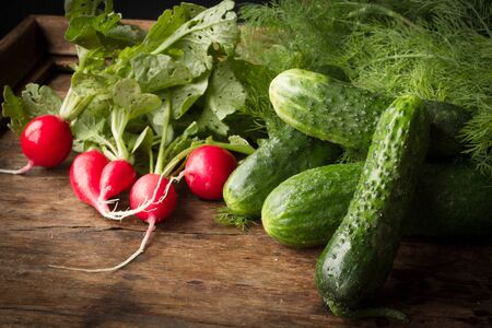radishes: radishes, cucumbers and dill