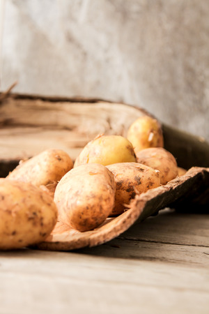 menu land: potatoes just vykapannaya from the ground on a wooden background
