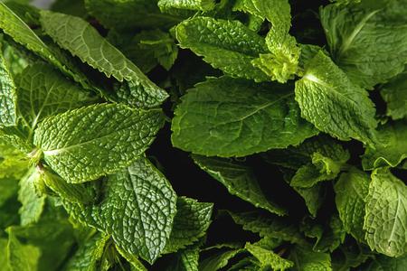 Fresh mint leaves. Italian herbs. Dark background