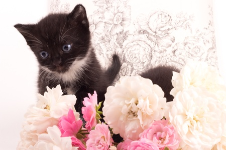 Cute black kitten with rose romantic background photo