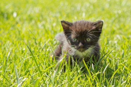 Cute kitten in outdoor in green grass photo