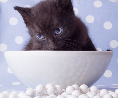 Cute black kitten blue backround and necklace photo