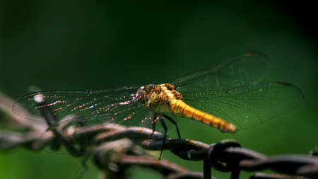 Dragonfly close up shot sitting on wire
