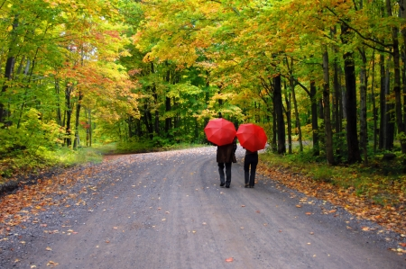 Retired couple stroll beneath a tunnel of yellow and gold leaves.  They have further protection from red umbrellas as they make the curve on a secluded dirt road. photo